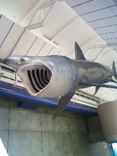 Unveiling ceremony of shark