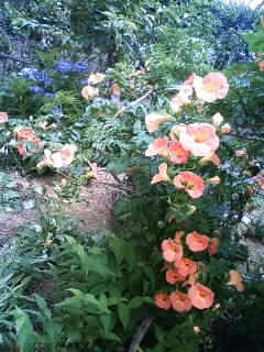 My garden in Mito
