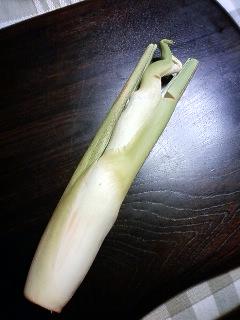 Makomo-dake(vegetable)